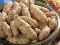 Anya Seed Potatoes