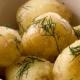 Accord Seed Potatoes