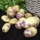 Blue Belle Seed Potatoes