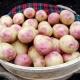 Bonnie Seed Potatoes