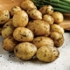 Vales Emerald Seed Potatoes